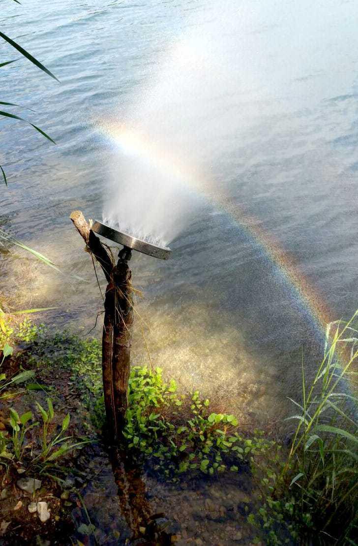 Portal am Teich