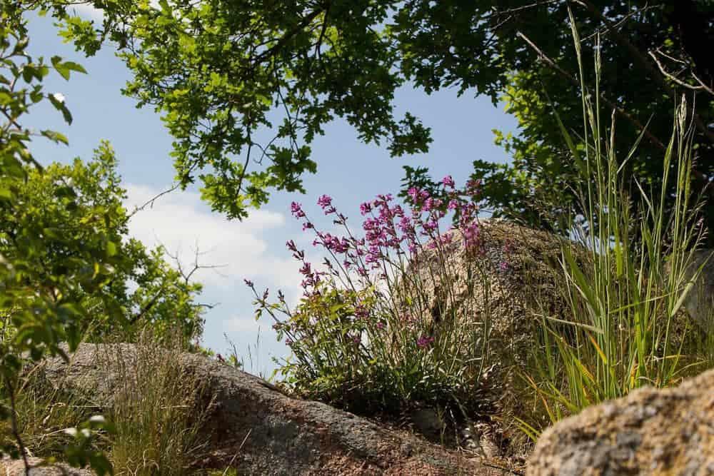 Fehhaube Steine und Blumen
