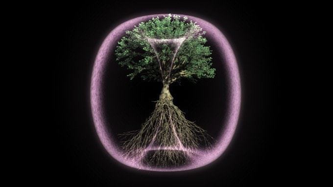 Torusfeld eines Baums